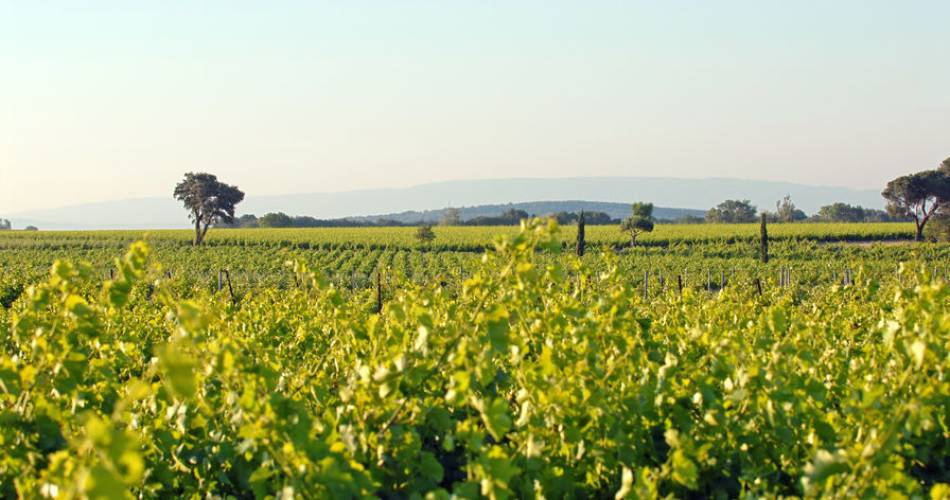 4x4 wine tours through the Quiot vineyards@©Famille Quiot