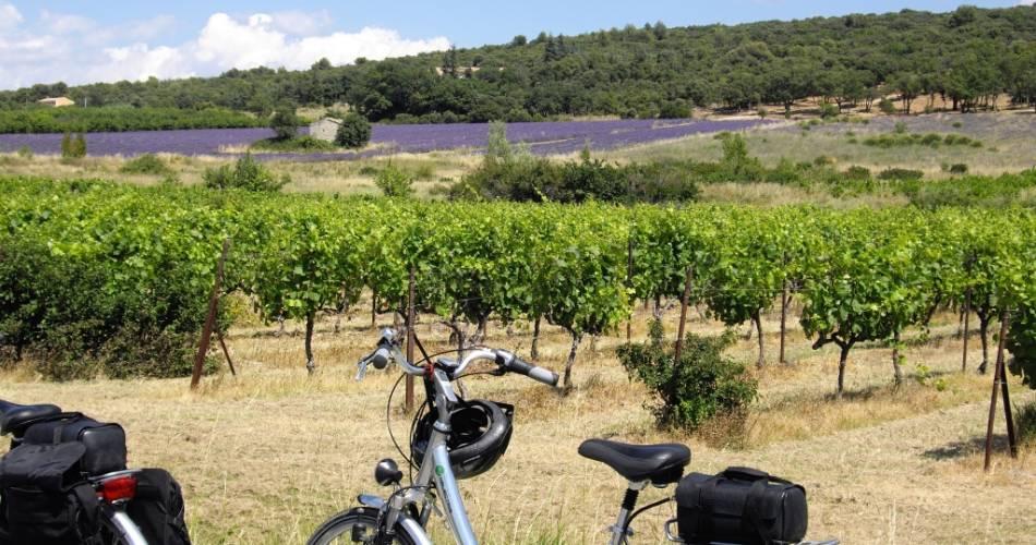 19 - les Terrasses du Ventoux@Valérie BISET - Coll. Vaucluse Tourisme