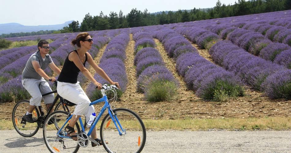 23 - The Plateau de Sault by bike@VPA84