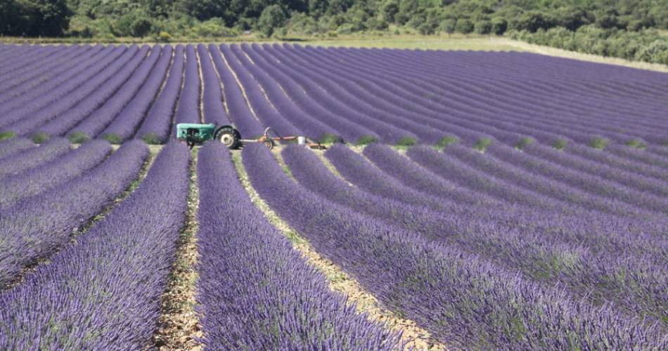 Touring the Côtes du Rhône by bike@ADTHV Provence RHone Ventoux - Muriel Pellegrin