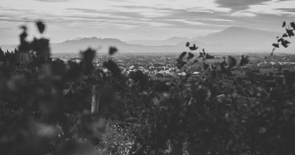 Wine tourism in Domaine Fontavin@©Domaine de Fontavin