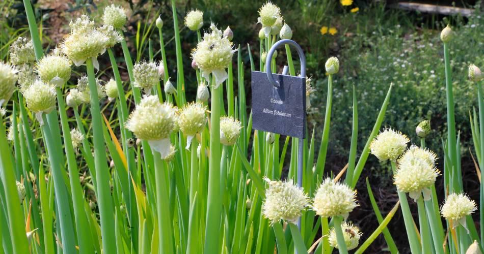 The Citadelle Botanical Garden@Coll. VPA / A. Hocquel