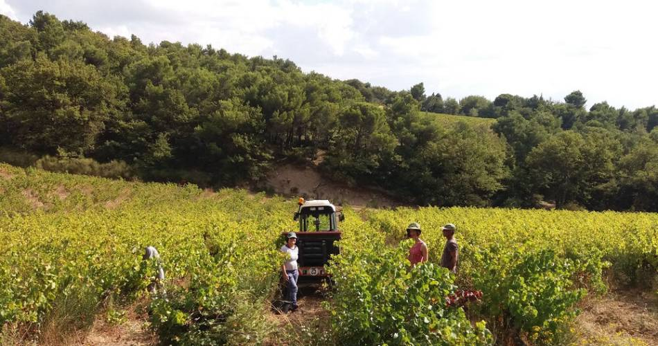 Discover harvest times at Domaine Beauvalcinte@M. Mendez