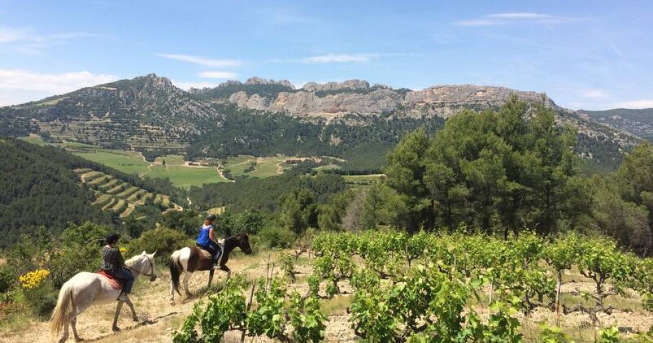 Discovering the wine country by horseback@Rhonéa