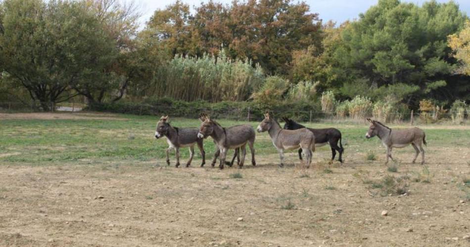 Wanderung mit einem Esel@Oreilles du Luberon