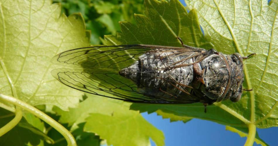 Atelier photographique nature@