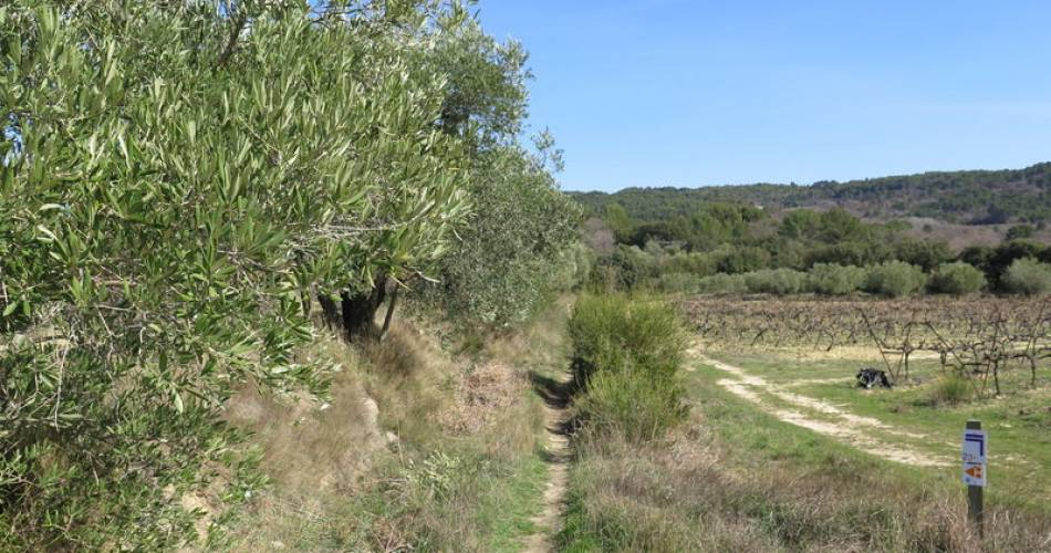 Hiking path N°1 at  Pernes-les-Fontaines - 5 km@G. Millet / OT Pernes