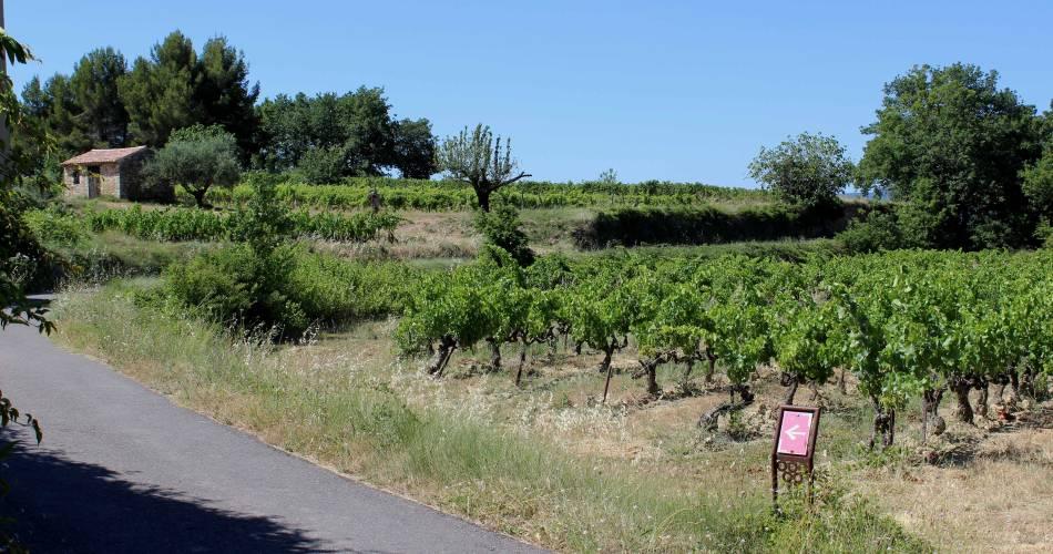 Sentier vigneron d'Oppède-Le Vieux@OT LCDP