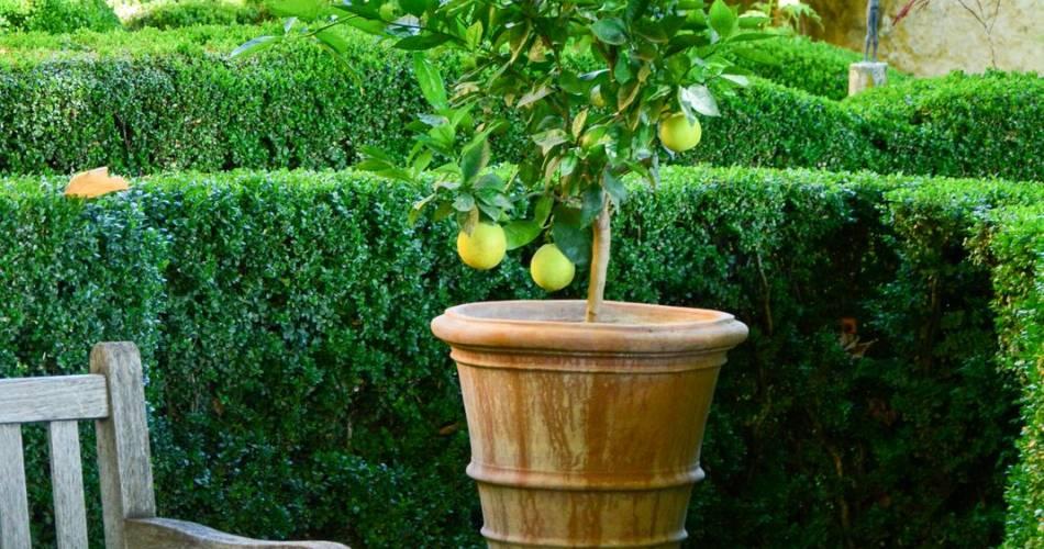 Jardin Pavillon de Galon@OT Luberon Côté Sud