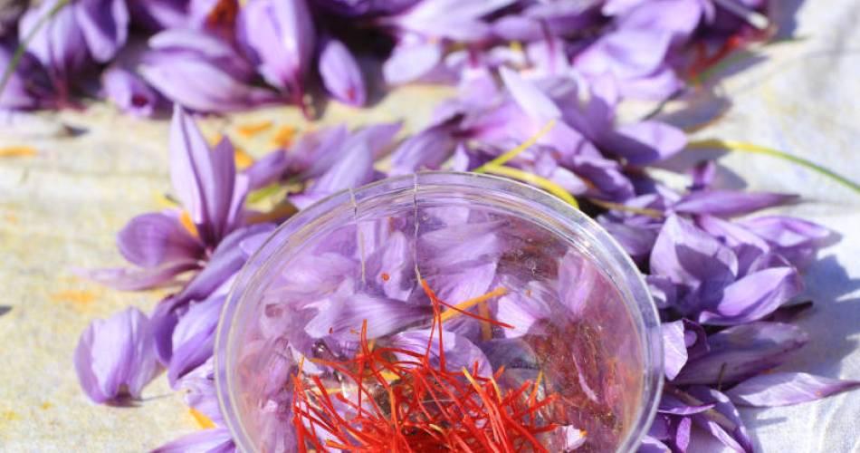 Saffron pistils - Aurélie Bathelier@
