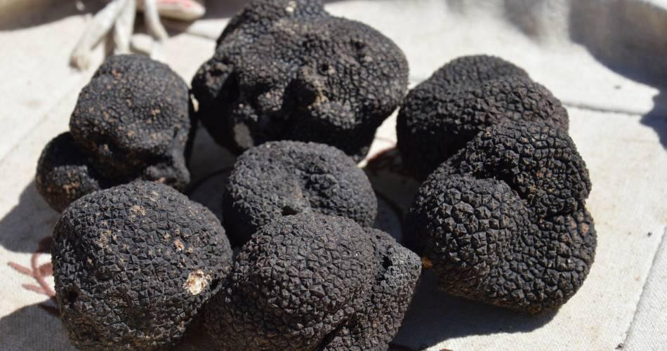 Marché aux Truffes d'été@OTI Ventoux Provence