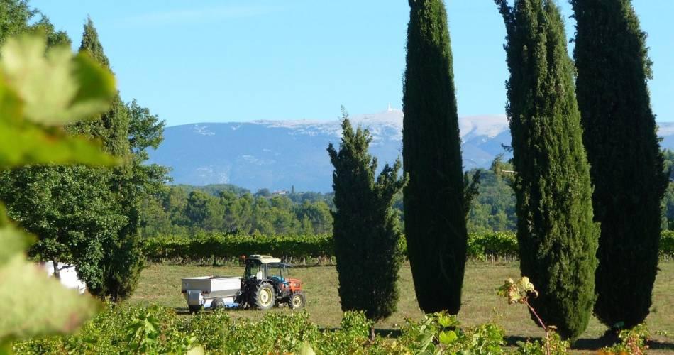 Pique-nique vigneron au Château Unang@Château Unang