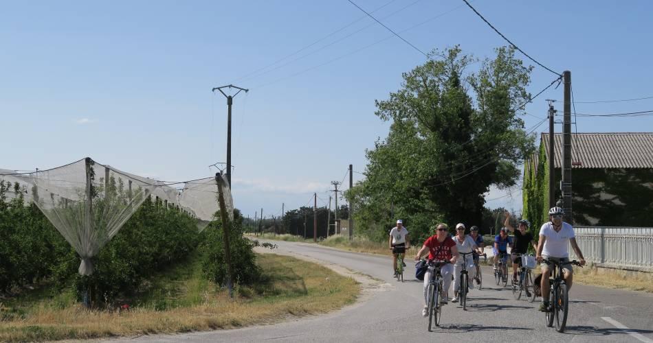 Liaison Isle-sur-la-Sorgue - Lagnes - Robion@Vélo Loisir Provence