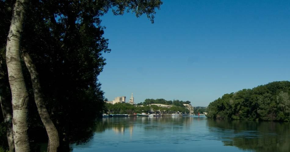 Balade de l'île de la Barthelasse - à vélo@Clemence Rodde_Coll. Avignon Tourisme