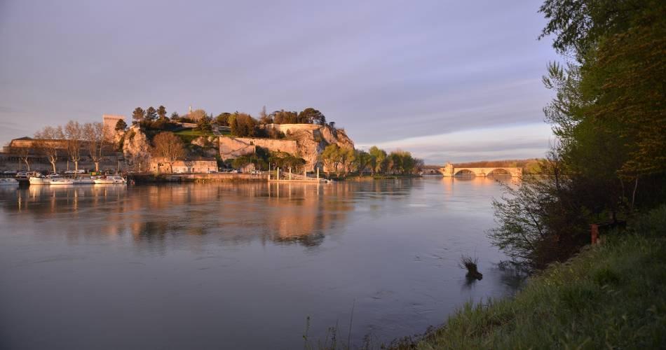 Balade de l'île de la Barthelasse - à vélo@Nicolas-Bryant_Coll. Avignon Tourisme.
