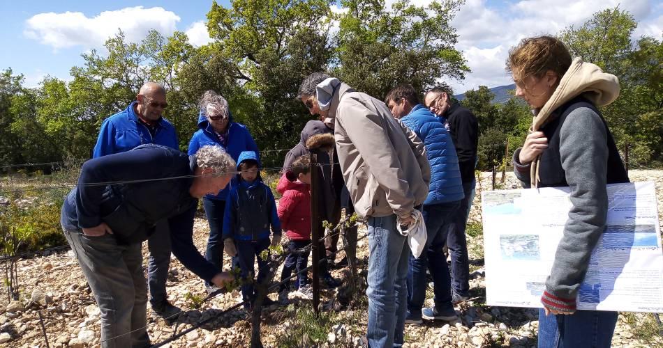 Balade au cœur des vignes au Domaine les Patys@Domaine Les Patys