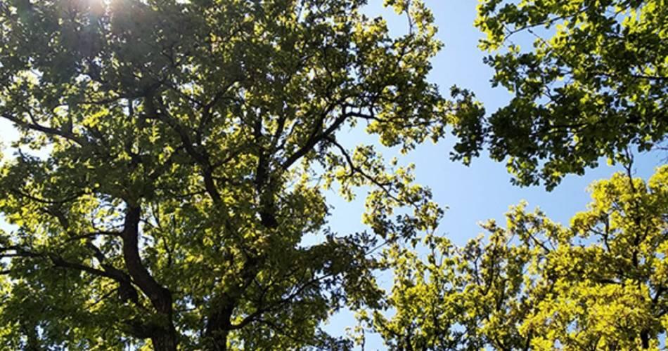 Plein Air - Restaurant Paysan@F.Droin