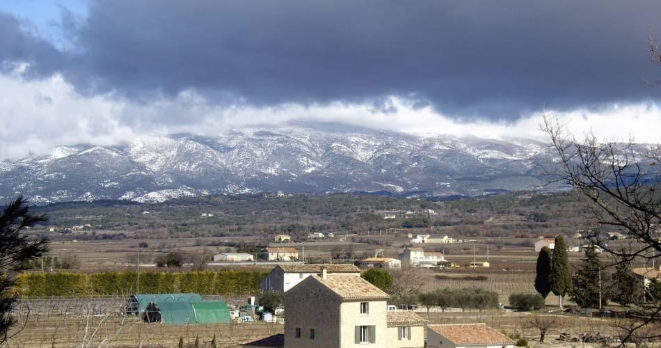 Les Oliviers de Notre Dame@OTI Ventoux Provence