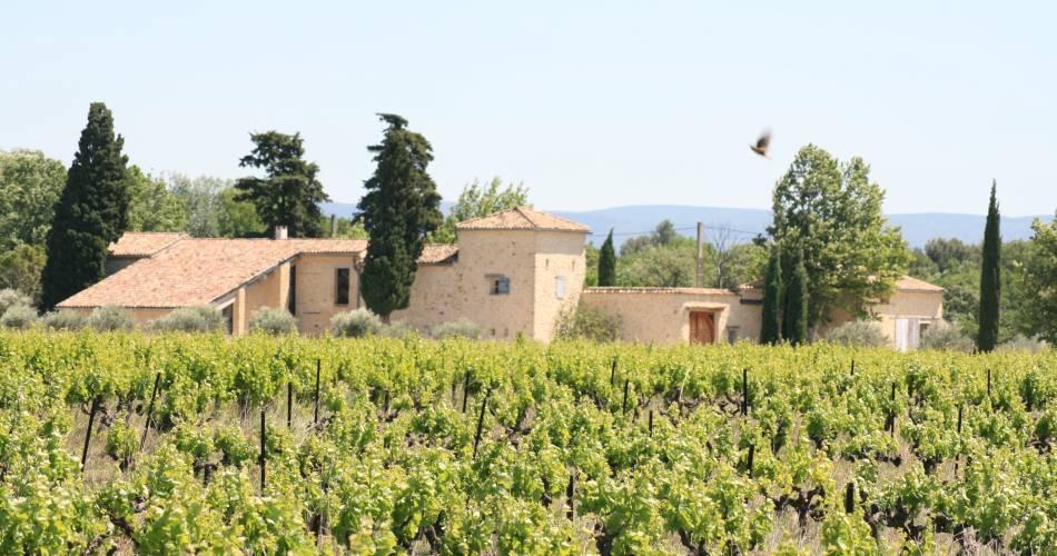 Local Food and Wine pairings at Mas de Caron@Domaine de Mas Caron
