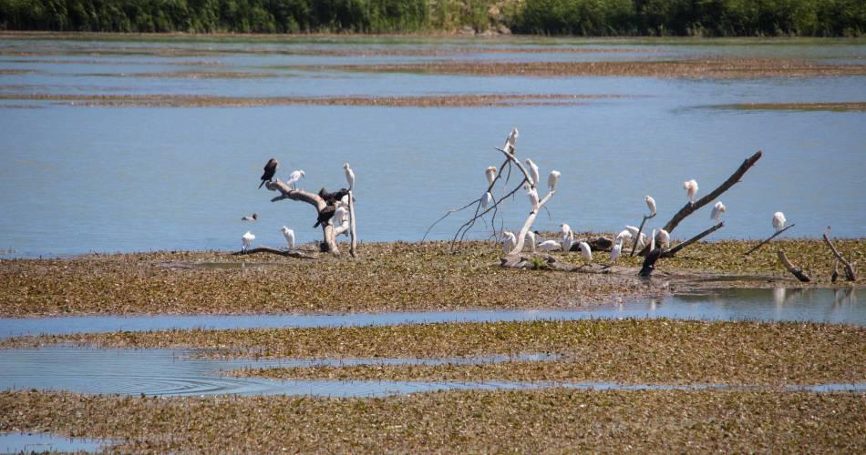 Observatoire Ornithologique de la Durance@Coll. VPA / A. Hocquel