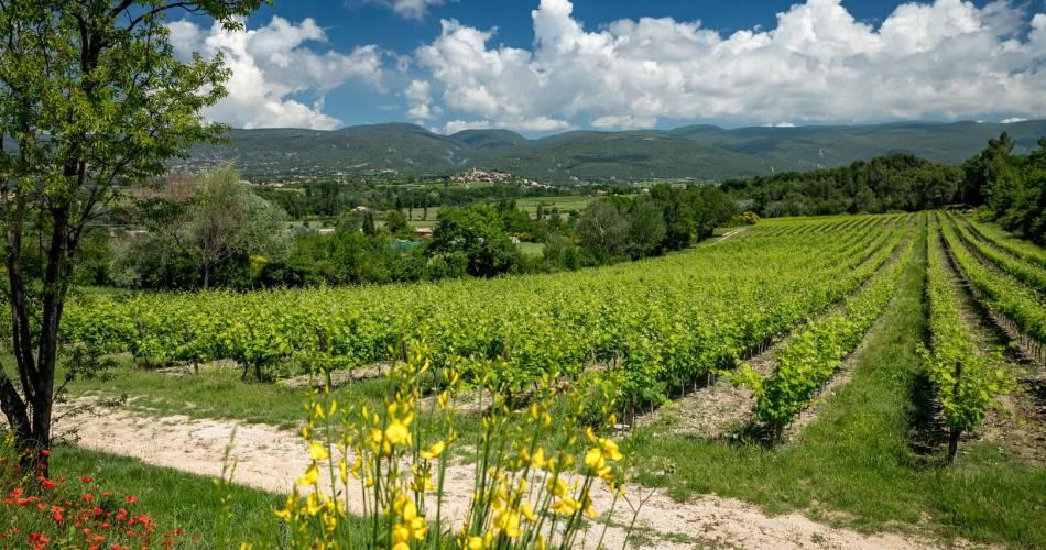 Château Saint Pons - Sentier vigneron@© Mme Monin