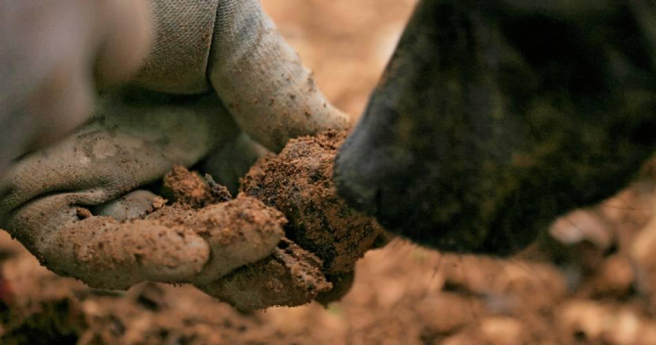 Découverte de la truffe et de truffières@La truffe du Ventoux