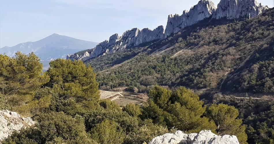 Dentelles de Montmirail: Paseo con guía en bicicleta@Régis Mathieu