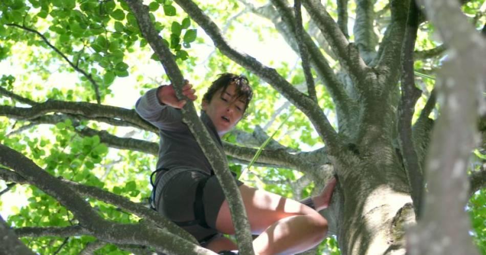 Améthyste - Grimpe d'arbres@© Améthyste
