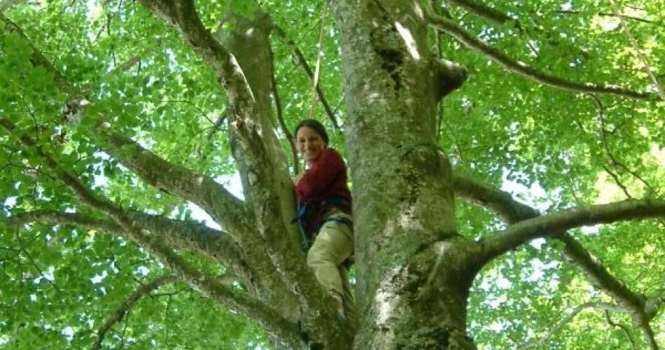 Améthyste - Grimpe d'arbres@améthyste