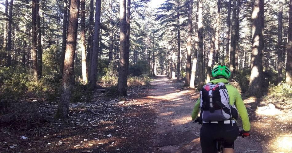 VTT n°49 - Forêt des Cèdres du Petit Luberon@© Maison du Parc du Luberon