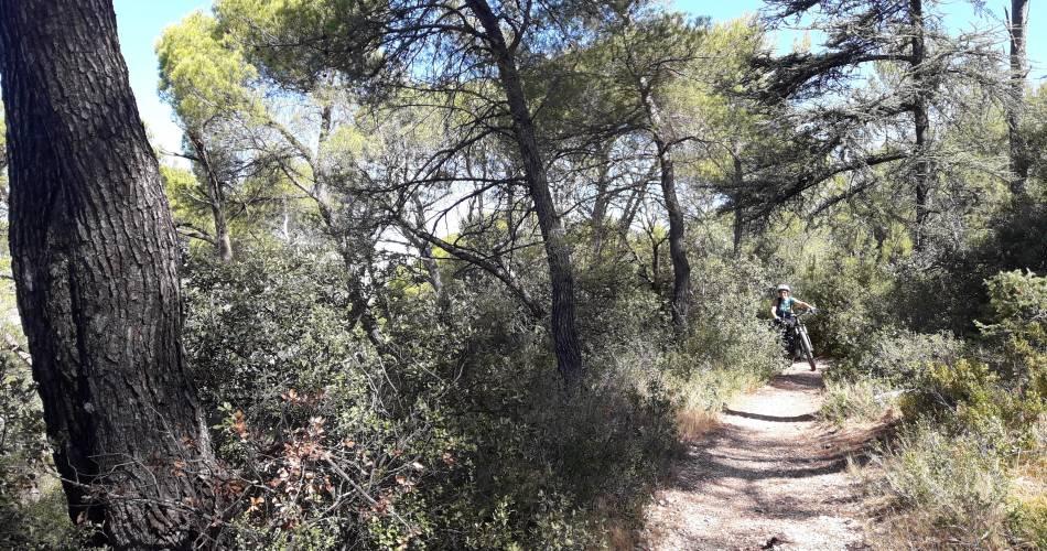 MTB no.43 - From the cedar forest to the Croix de Lagnes@Eric Garnier