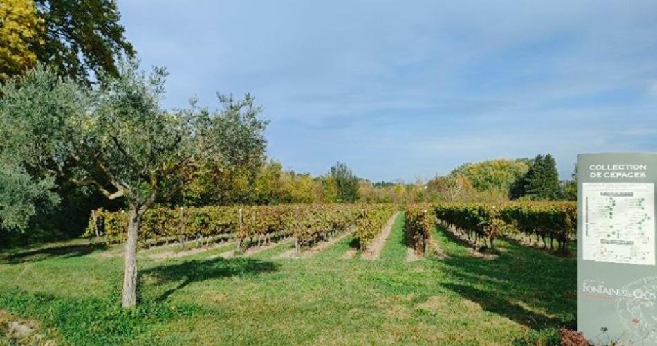Vigne collection du Domaine Fontaine du Clos@Fontaine du Clos