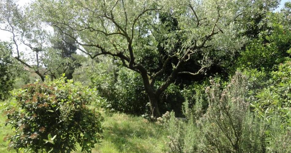 Maison au coeur des oliviers@©Anne Benedetti