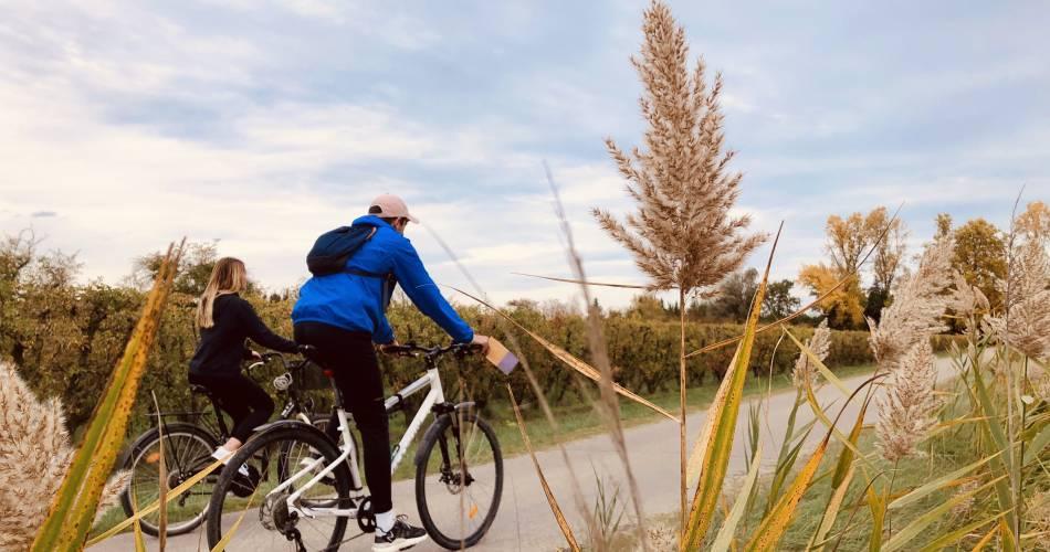 cycle tour  between vineyards and landscape@Isle sur la Sorgue Tourisme