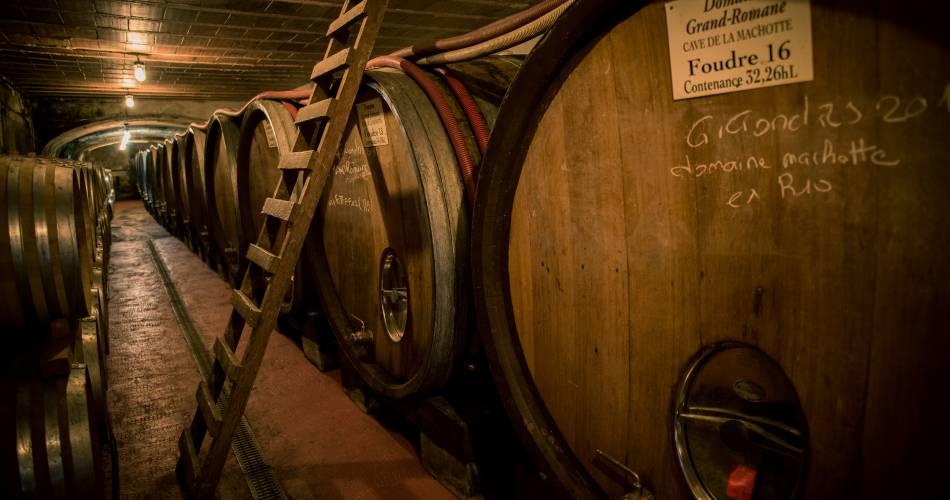 Balade culturelle au sein du vignoble et dégustation - Les Celliers Amadieu@Les Celliers Pierre Amadieu