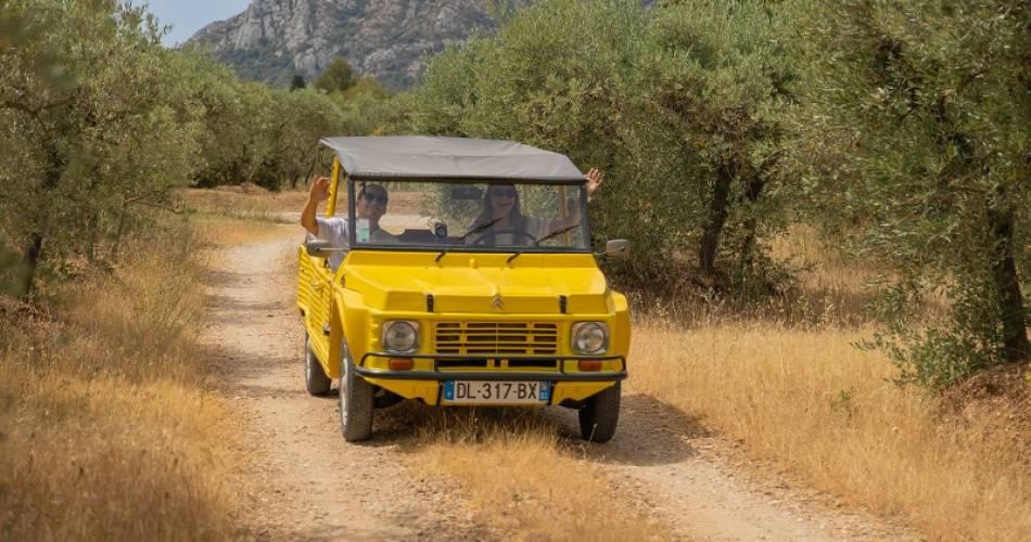 Balades en voitures anciennes en Ventoux-Provence@Curious Provence