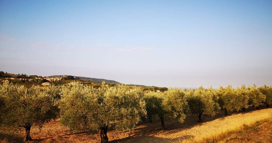 Balade dans les oliveraies du moulin O' live PROD@O Live prod