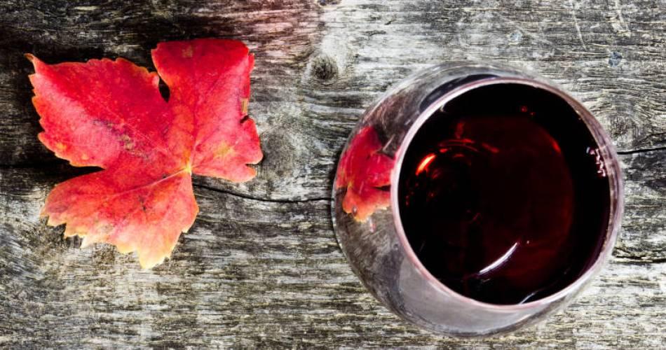 Visite du chai, dégustation des vins et produits du terroir du domaine La Ferme des Arnaud@