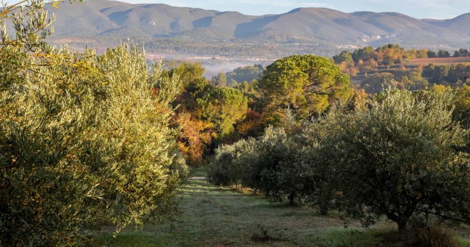 Visite de l'oliveraie de la Bastide Du Laval@A. Hocquel