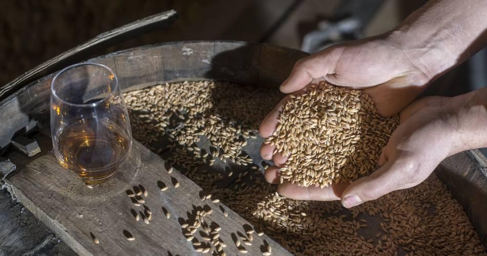 Visite de la distillerie de whisky du Château et dégustation@Chateau du Barroux