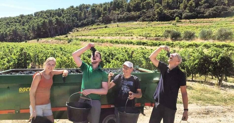 Découvrez la viticulture biologique au Domaine Clos de Caveau@Clos de Caveau