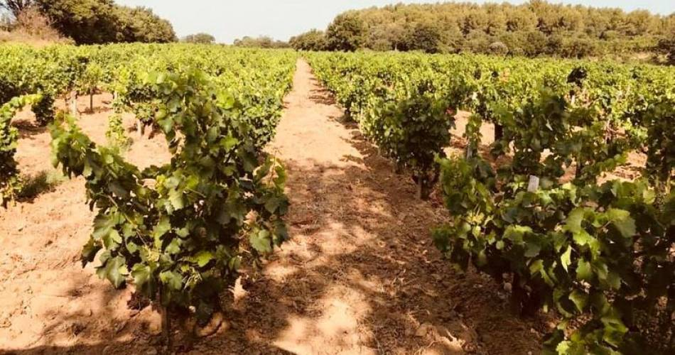 Domaine Jean Royer@©Domaine Jean Royer