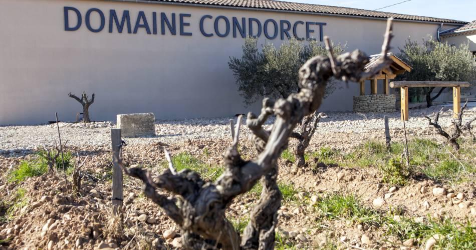 Wine tourism at Domaine Condorcet@Domaine Condorcet
