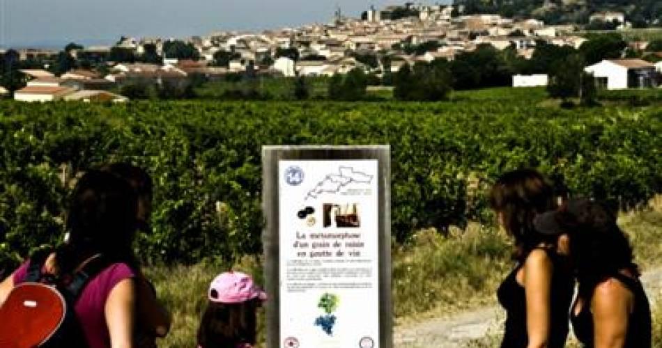 Escapade au coeur du vignoble de Châteauneuf-du-Pape@Ulla Reimer