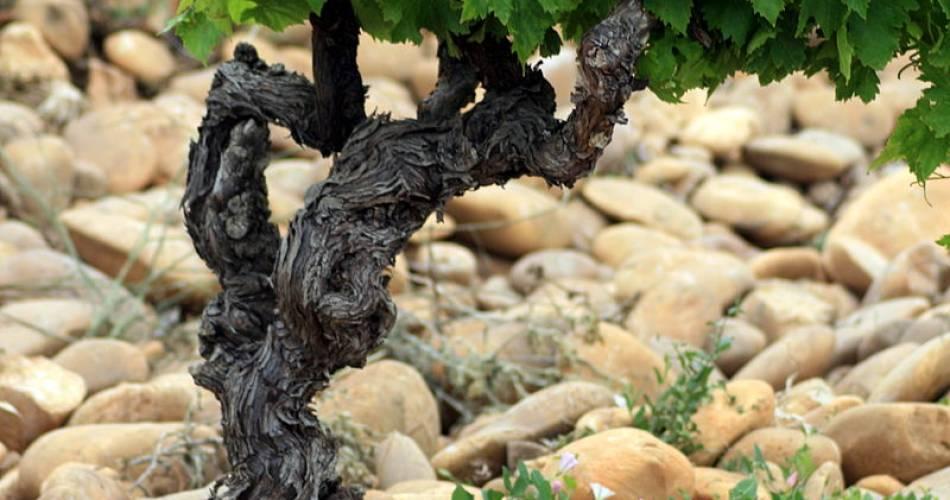 Escapade au coeur du vignoble de Châteauneuf-du-Pape@©OTPRO