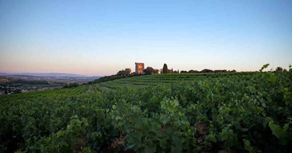 1 - From the vineyards of Châteauneuf-du-Pape to the Ouvèze plains@Akta