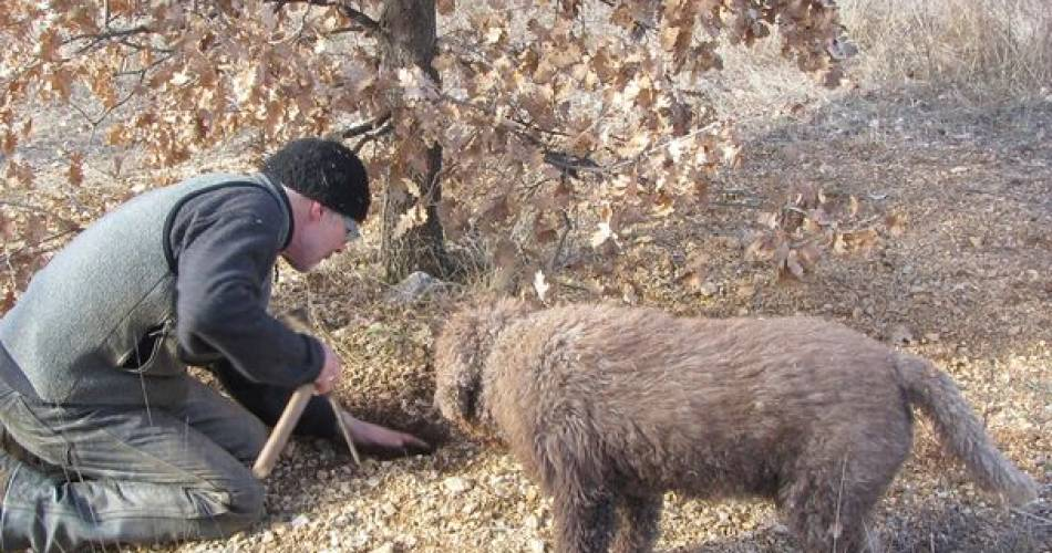 Nicolas Monnier - Truffle farmer@Nicolas Monnier