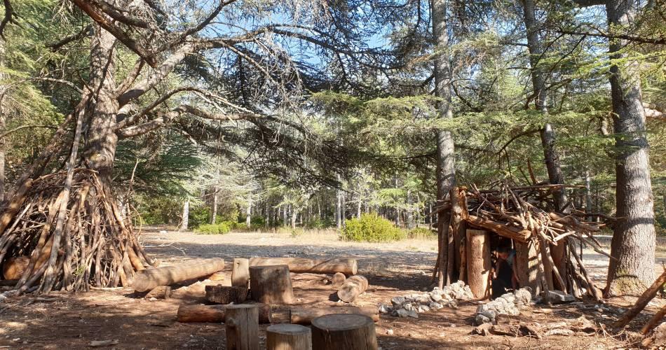 La Forêt des cèdres@Office de tourisme Pays d'Apt Luberon
