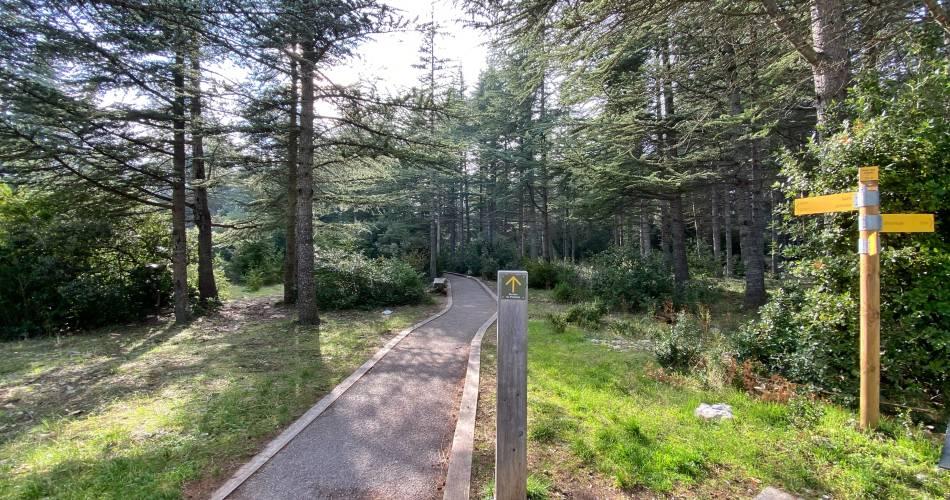 La Forêt des cèdres@© Office de Tourisme Pays d'Apt Luberon